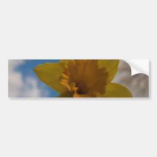 Daffodil in spring bumper sticker
