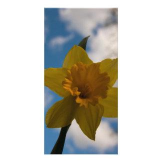 Daffodil in spring card