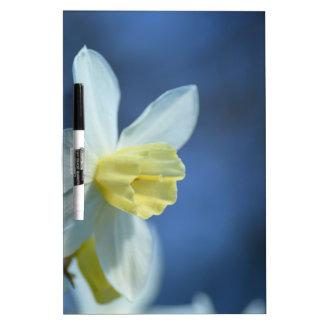 Daffodil in Spring Dry-Erase Board
