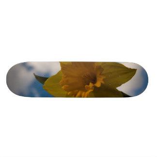 Daffodil in spring skate deck