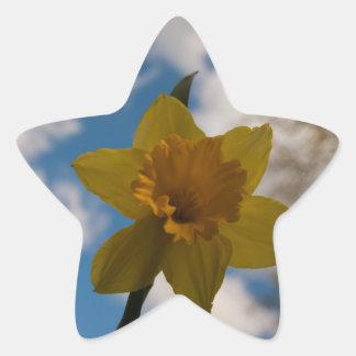 Daffodil in spring star sticker