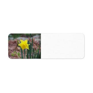 Daffodil Label