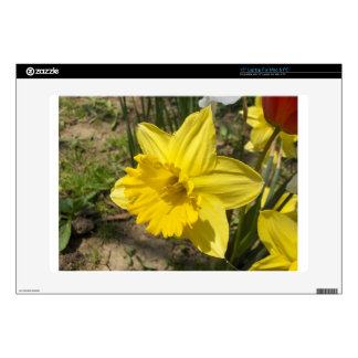 Daffodil Laptop Skin