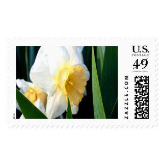Daffodil Large Postage Stamp