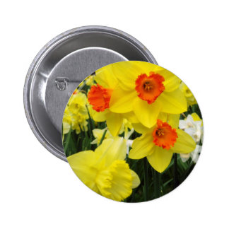 Daffodil Mix Simple Pinback Buttons