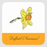 Daffodil (Narcissus) Botanical Seal Stickers
