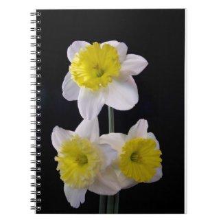 Daffodil Notebook fuji_notebook