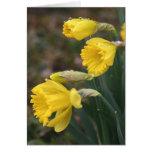 Daffodil Notecard 2 Greeting Card