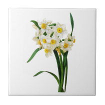 Daffodil or Narcissus By Pierre Joseph Redoute Tile