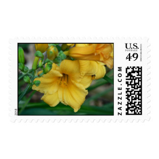 Daffodil Postage