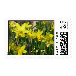Daffodil Postage Stamps!