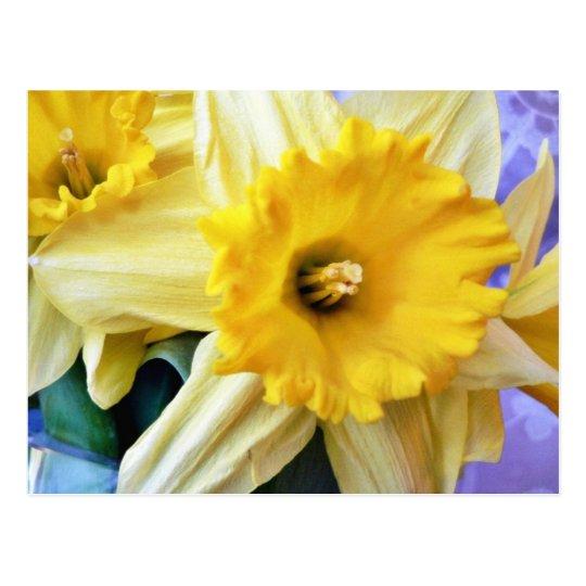 Daffodil Postcard