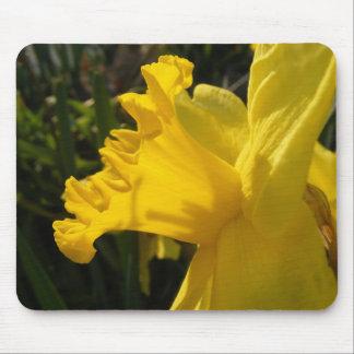 Daffodil Salutes Mouse Pad
