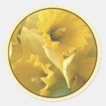 daffodil seal round sticker