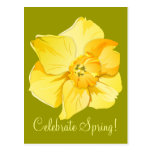 Daffodil Spring Yellow Short Trumpet Post Card