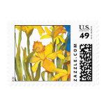 Daffodil square postge stamps