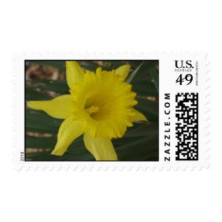 Daffodil Stamp