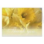 daffodil thankyou 1 cards