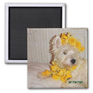 Daffodil Westie Magnet