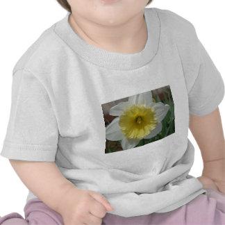 daffodil,white and yellow daffodil tshirt