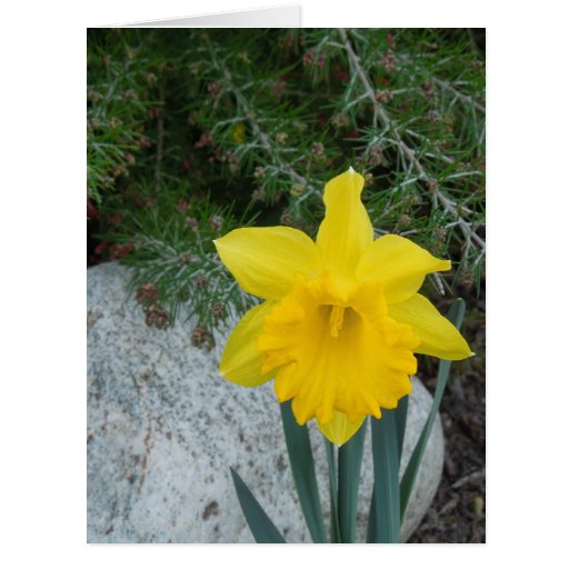 Daffodil: You Brighten My Life Card