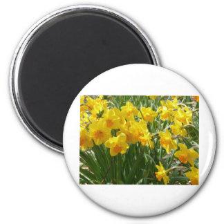daffodile yellow magnet