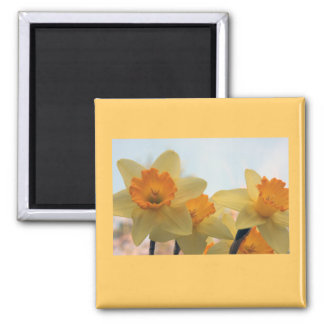 Daffodills 2 Inch Square Magnet