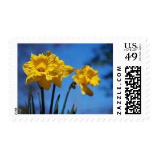Daffodills Postage Stamp
