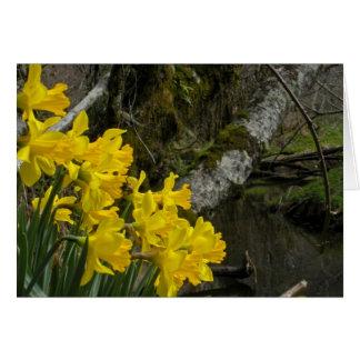 Daffodils 01 cards
