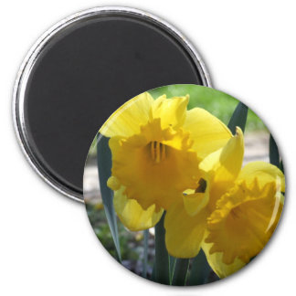 Daffodils 2 Inch Round Magnet