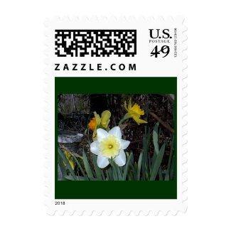 Daffodils 4 postage