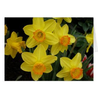 Daffodils All Occasion Card