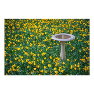 Daffodils and Birdbath Photograph
