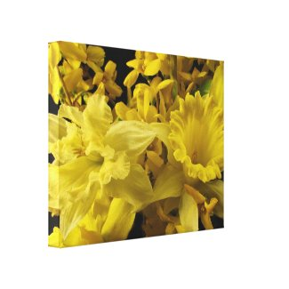 Daffodils and Forsythia Stretched Canvas Prints