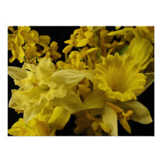 Daffodils and Forsythia Poster