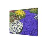 Daffodils and Grape Hyacinth, Keukenhof Canvas Print