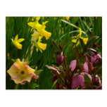 Daffodils and Lenten Roses II Colorful Floral Postcard