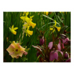 Daffodils and Lenten Roses II Colorful Floral Poster