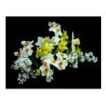 Daffodils and Lilacs Postcard
