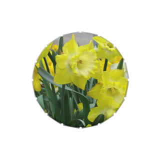 Daffodils and Narcissus Jelly Belly Tin