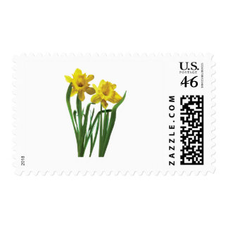 Daffodils At Attention Stamps