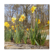 Daffodils at Easter Ceramic Photo Tile