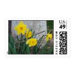 Daffodils at Graeme Park Stamp