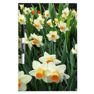 Daffodils Dry Erase Whiteboards