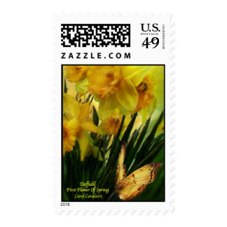 Daffodils - First Flower Of Spring Postage