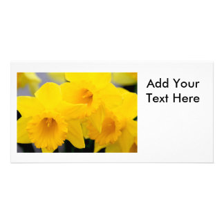 Daffodils Flowers Personalized Photo Card