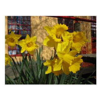 Daffodils Granville Island, Vancouver BC Postcard