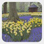 Daffodils, grape hyacinth, and tulip garden, square sticker