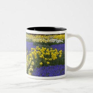 Daffodils, grape hyacinth, and tulip garden, Two-Tone coffee mug