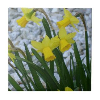 Daffodils Growing Tiles